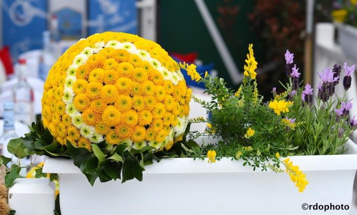 Copia di fiori palla viillaggio.jpg