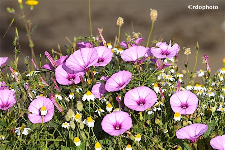 fiori.jpeg